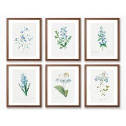 """Серія постерів в рамках """"Flowers. Botany"""""""